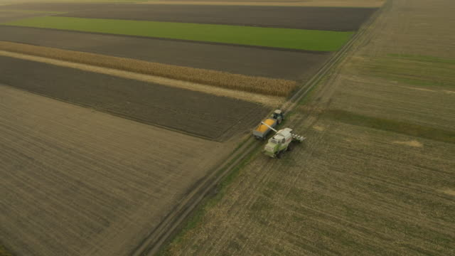 AERIAL Using Combine Harvester For Cutting Corn