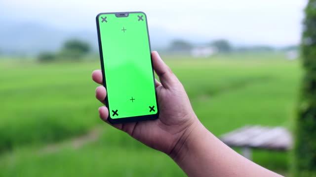 vídeos de stock, filmes e b-roll de usando telefone inteligente com tela verde em fundo de campo de arroz, chroma key - cena rural