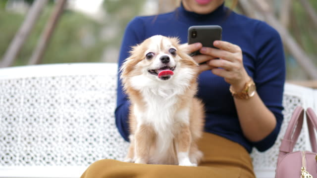 using smartphone touching screen with cute pet dog - pet owner stock videos & royalty-free footage