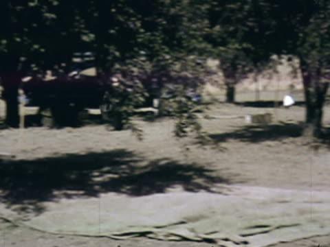vídeos y material grabado en eventos de stock de usingmontage orchard workers using tarps under trees to gather prunes as they are picked / sebastopol, california, united states - árbol de hoja caduca