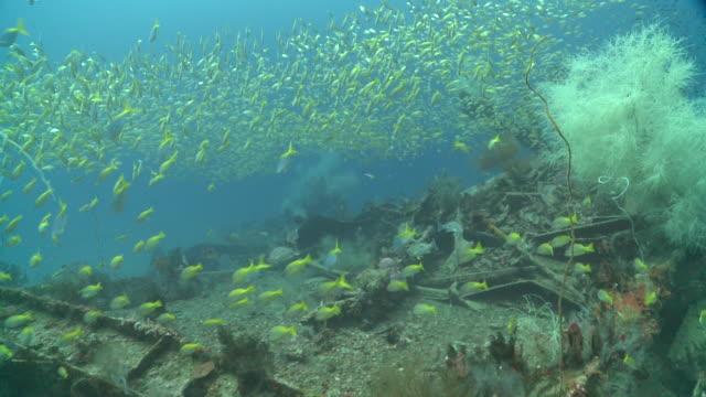 Usukan Bay World War II Japanese wrecks with schooling fish, Mayne Rock, Sabah, Malaysia