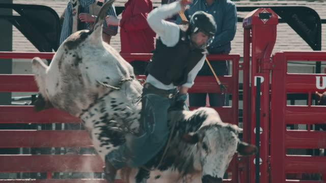 utah stier reiten-rodeo - rodeo stock-videos und b-roll-filmmaterial