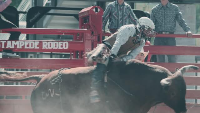 utah bull riding rodeo - bucking bronco stock videos & royalty-free footage