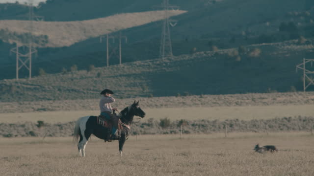 vídeos de stock, filmes e b-roll de vaqueiro de utah montando no campo - western usa