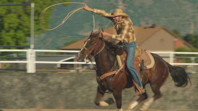 utah cowboy roping a calf - pursuit concept stock videos & royalty-free footage