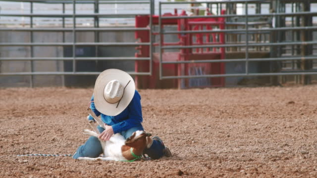 utah goat  rodeo - pursuit sports competition format stock videos and b-roll footage