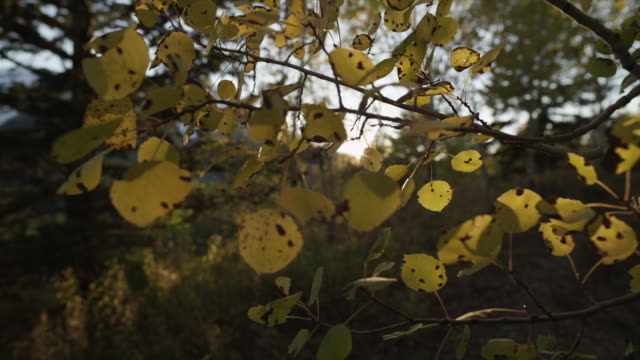 usa, utah, provo canyon, autumn leaves - provo stock-videos und b-roll-filmmaterial