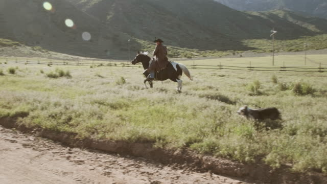 utah rancher and horse - prairie stock videos & royalty-free footage