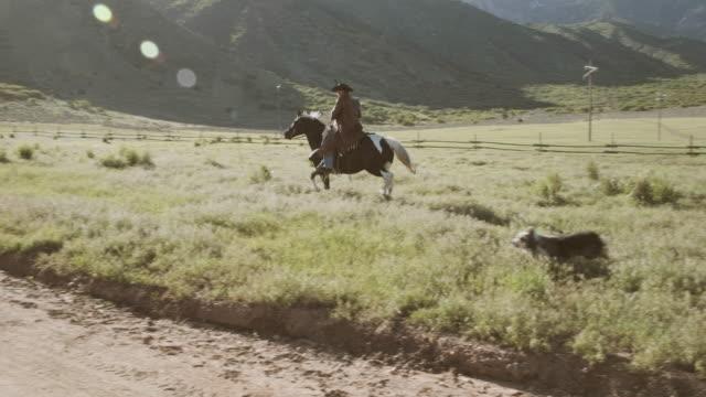 stockvideo's en b-roll-footage met utah rancher en paard - prairie
