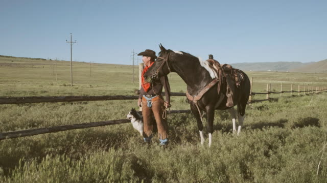 utah rancher and horse - border collie stock videos & royalty-free footage