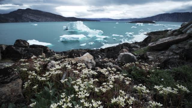 uummannaq fjord - greenland stock videos & royalty-free footage
