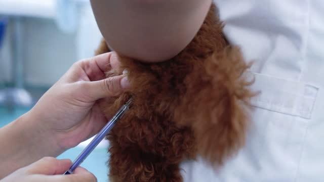 ペットの予防接種 - 殺人者点の映像素材/bロール