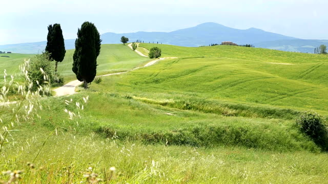 val d'orcia - siena italy stock videos and b-roll footage