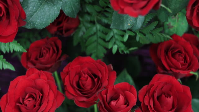 valentine's day roses - rose stock videos & royalty-free footage