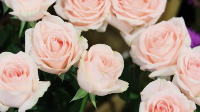 vidéos et rushes de saint valentin roses - rosée