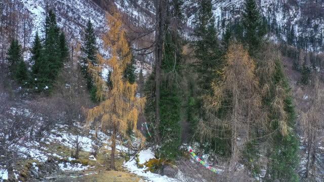 vídeos y material grabado en eventos de stock de valle a finales de otoño, un aliento marchudo - pinaceae