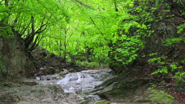 valley scenery / hongcheon-gun, gangwon-do, south korea - エコツーリズム点の映像素材/bロール