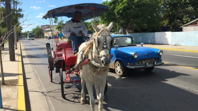 stockvideo's en b-roll-footage met varadero, cuba: horse-drawn carriage working as city tour vehicle in the resort town - alleen één mid volwassen man
