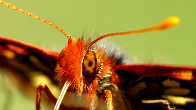 vidéos et rushes de variable, papillon - des papillons dans le ventre