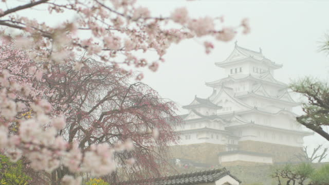 Variation of cherry blossoms blooming in front of and around Himeji Castle Rack focus Himeji Castle standing in the middle of cherry blossoms in full...