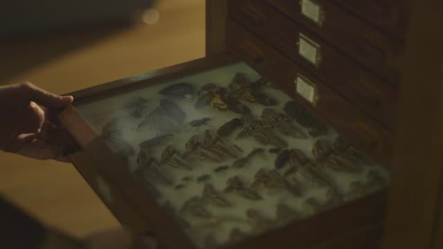 varied cus inside a zoology museum - zoologia video stock e b–roll