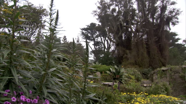varieties of plants and flowers fill tresco abbey gardens. available in hd. - isles of scilly stock videos & royalty-free footage
