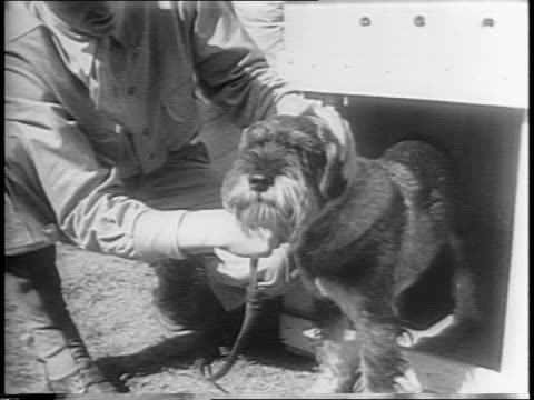 A variety of breeds of dogs at a Coast Guard training camp for advanced battle training / field of dog houses / Coast Guardsman holding dog closeup...