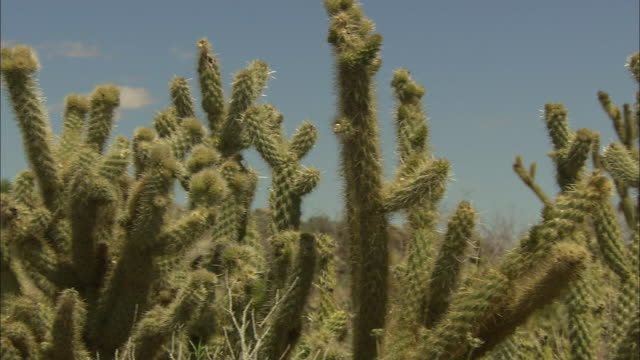 A variety of cacti thrives in a California desert.
