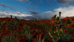 Variety of cactus plant on dry land in sunset time