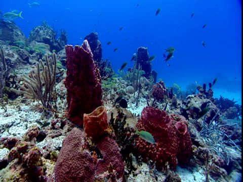 a variety of fish forage among colorful corals. - 食糧を捜す点の映像素材/bロール