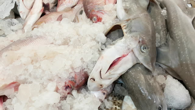 variety of fish on fish market display - dogfish stock videos & royalty-free footage