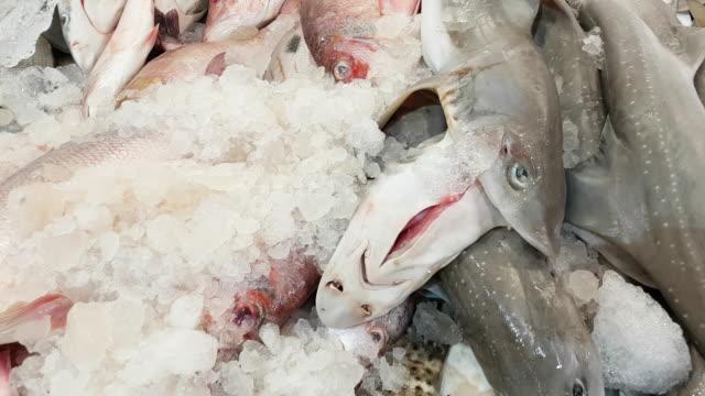 stockvideo's en b-roll-footage met scala aan vis vis markt tentoongesteld - doornhaai