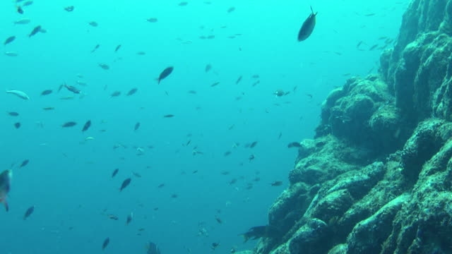 a variety of fish swim along a rocky outcropping. - futter suchen stock-videos und b-roll-filmmaterial