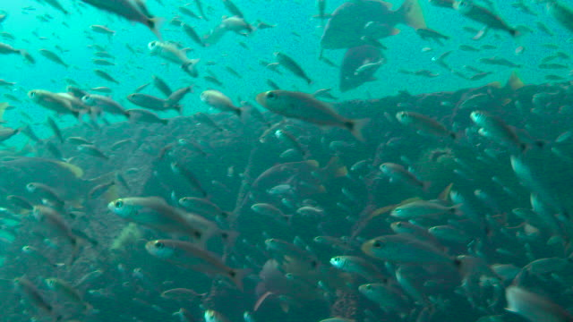 a variety of fish swim around a shipwreck. - sea of cortez stock videos & royalty-free footage