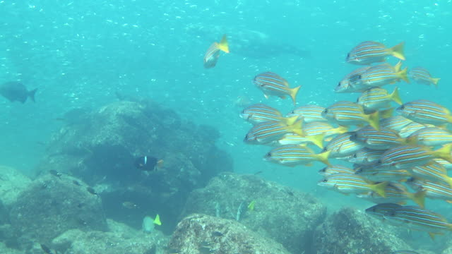 a variety of fish swims over corals. - sea of cortez stock videos & royalty-free footage