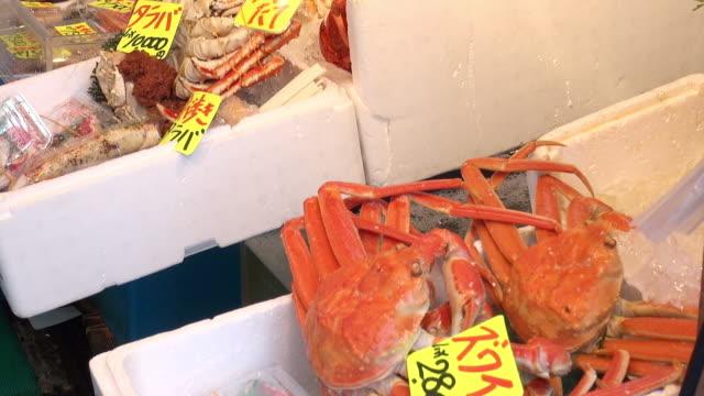 vídeos de stock, filmes e b-roll de a variety of fresh seafood, snow crab, king crab, at tsukiji market - grupo mediano de animales