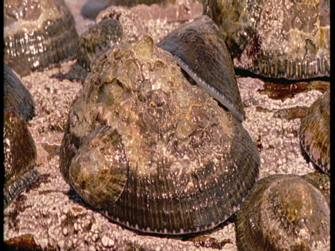 a variety of limpets cling to a rock. - tidal pool stock videos and b-roll footage