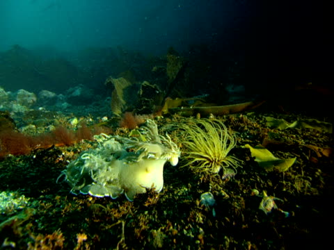 A variety of marine life thrives in Telegraph Cove.