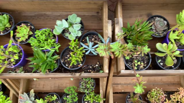 variety of miniature potted succulents in wood boxes - botany stock videos & royalty-free footage
