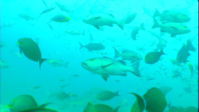 a variety of tropical fish swims in clear waters. - saltwater fish stock videos & royalty-free footage