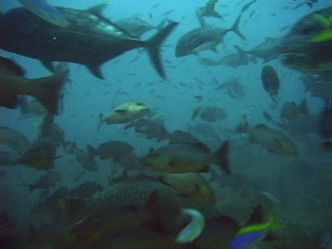 a variety of tropical fishes - tierisches exoskelett stock-videos und b-roll-filmmaterial