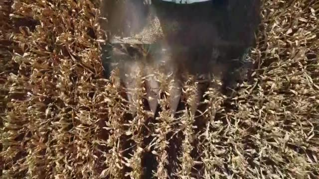 various aerial shots showing that farmers harvest corn with combine harvesters at a field in turkey's western izmir province on september 22 2017 - agricultural machinery stock videos and b-roll footage