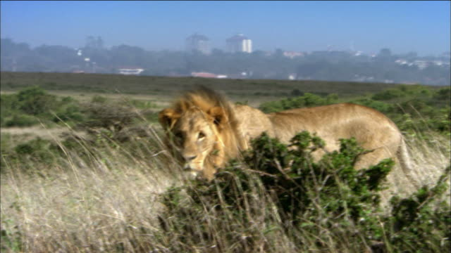 various animals in the nairobi national park - nairobi stock videos and b-roll footage
