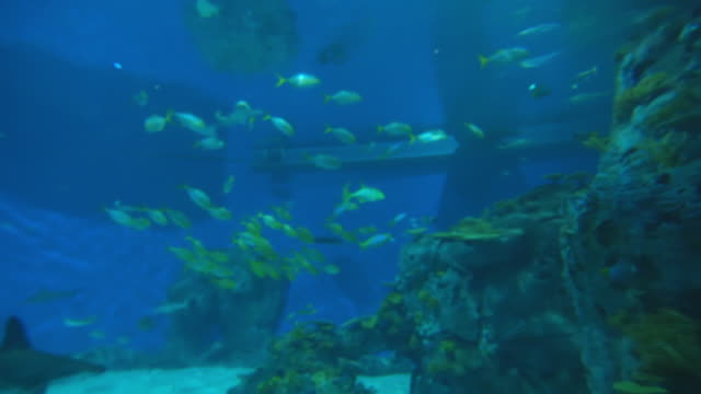 various aquatic animals swimming in tank at famous aquarium - copenhagen, denmark - tank stock videos & royalty-free footage