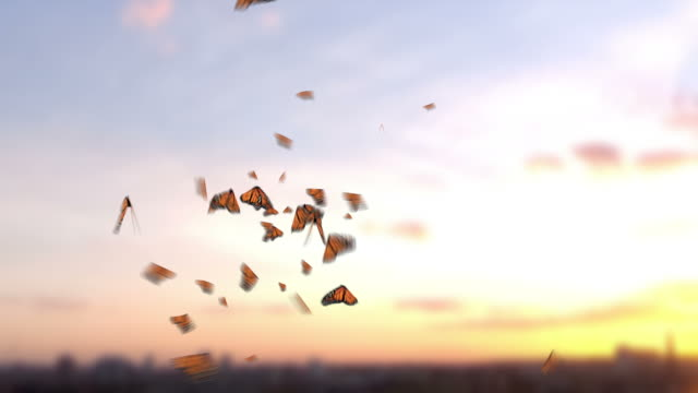 various butterflies - butterfly stock videos & royalty-free footage