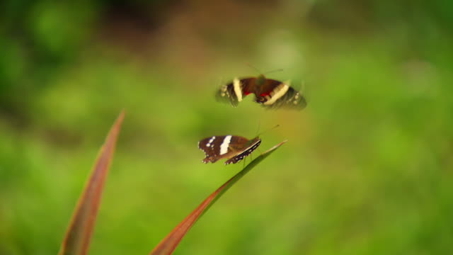 various colourful butterflies in costa rica - 数匹の動物点の映像素材/bロール