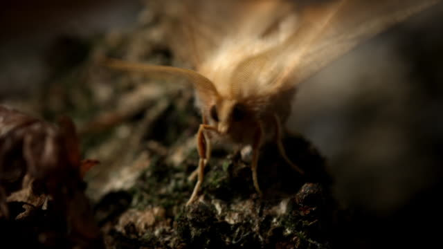 various cus of moths at night in natural settings - log stock videos & royalty-free footage