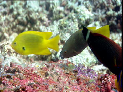 various fish eating coral - エンゼルフィッシュ点の映像素材/bロール