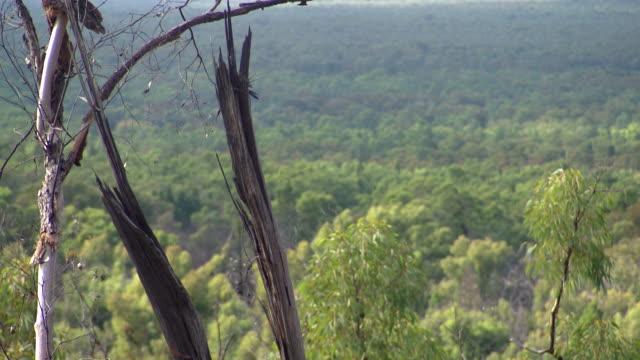 vídeos y material grabado en eventos de stock de various high shots of pilliga scrub a semiarid woodland in north central nsw cleared paddock in one shot - bush land