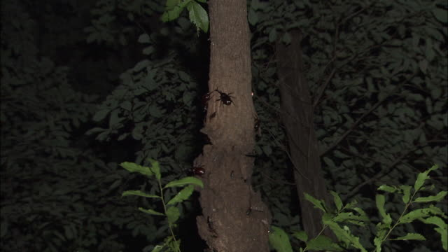Various Insects Gathering Around Trees